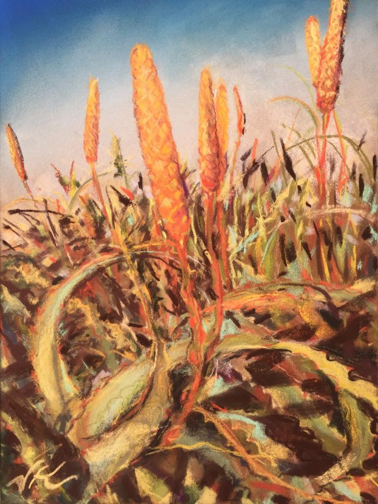 Aloe California Coastal
