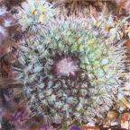 Perfect Cactus