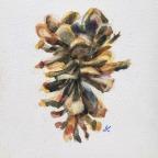Exuberant, Inverted and Dangled Ponderosa Cones