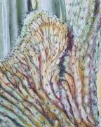 Cresed Saguaro