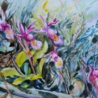 Calypso Bulbosa – Fairy Slipper